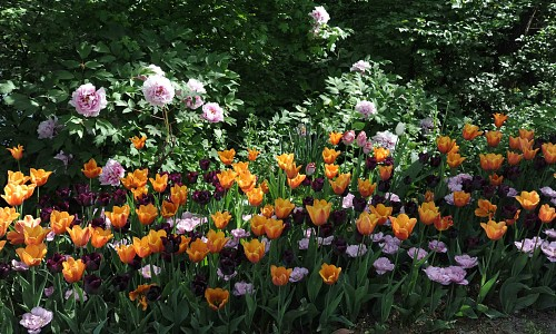 Messer Tulipano cresce ancora on line